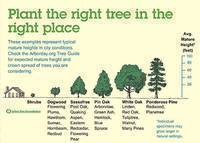 Start planning now to plant energy-saving trees this fall
